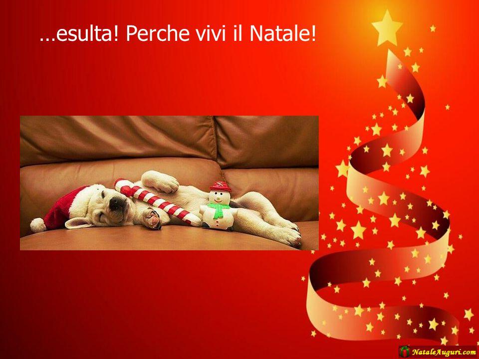 …esulta! Perche vivi il Natale!