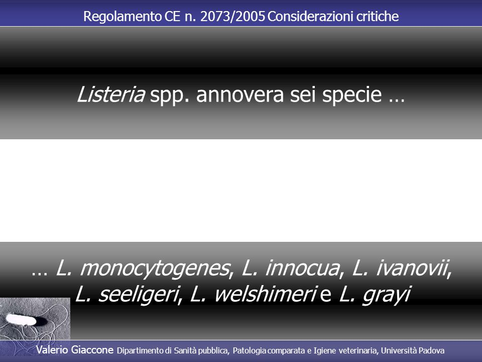 Listeria spp. annovera sei specie …
