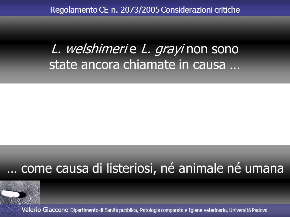 L. welshimeri e L. grayi non sono state ancora chiamate in causa …