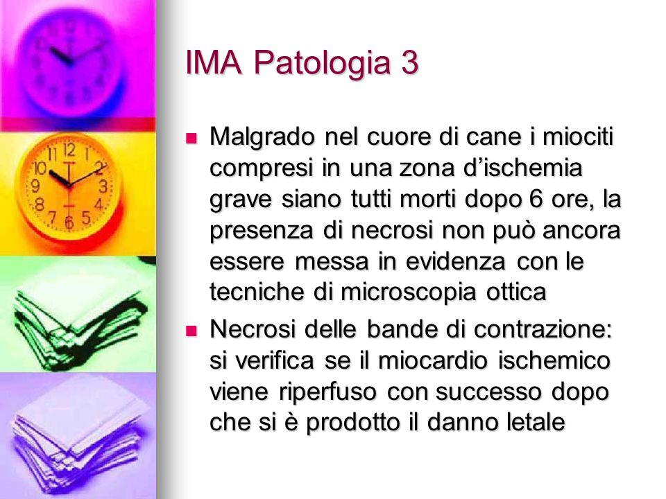 IMA Patologia 3