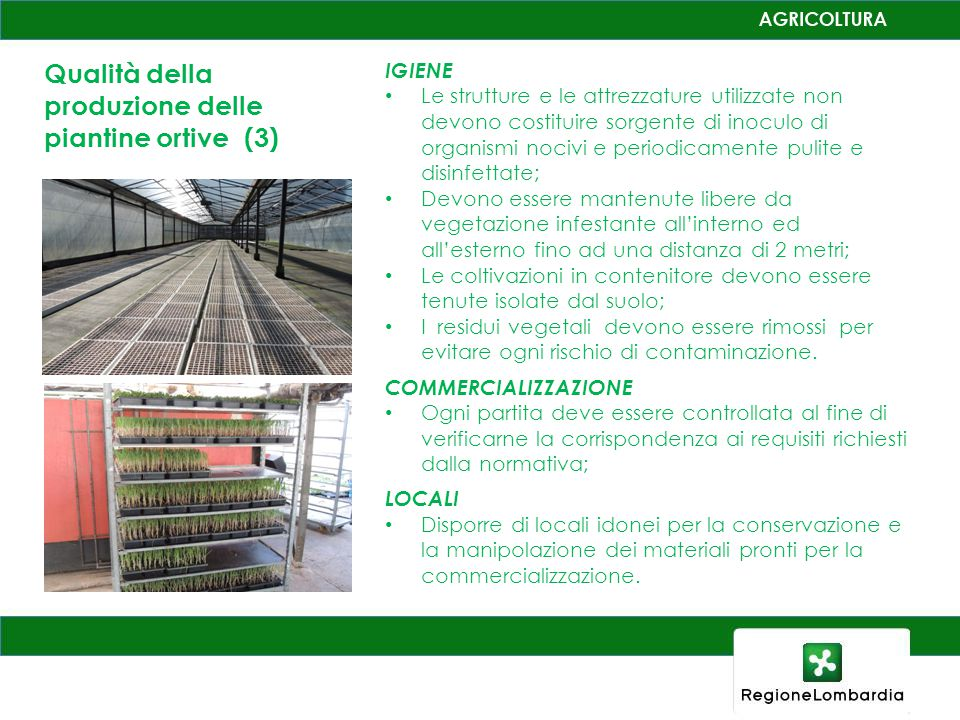 Qualità della produzione delle piantine ortive (3)