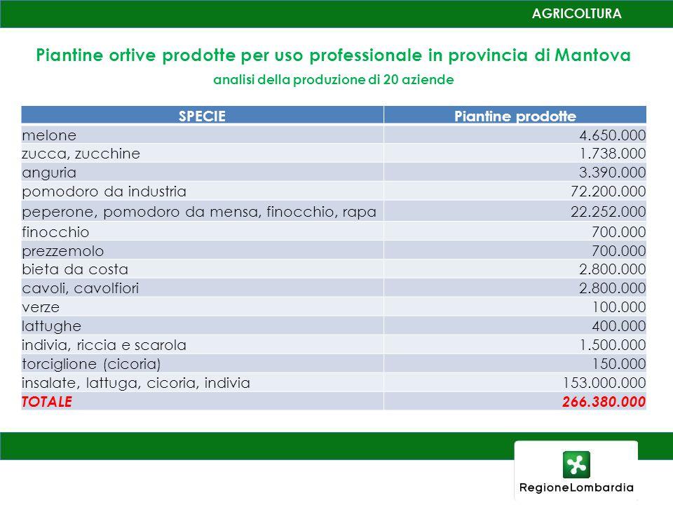 Piantine ortive prodotte per uso professionale in provincia di Mantova