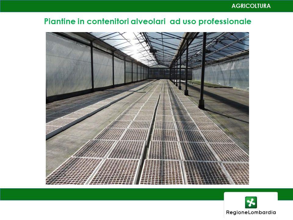 Piantine in contenitori alveolari ad uso professionale