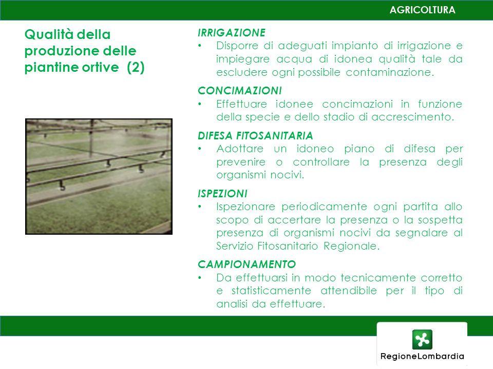 Qualità della produzione delle piantine ortive (2)