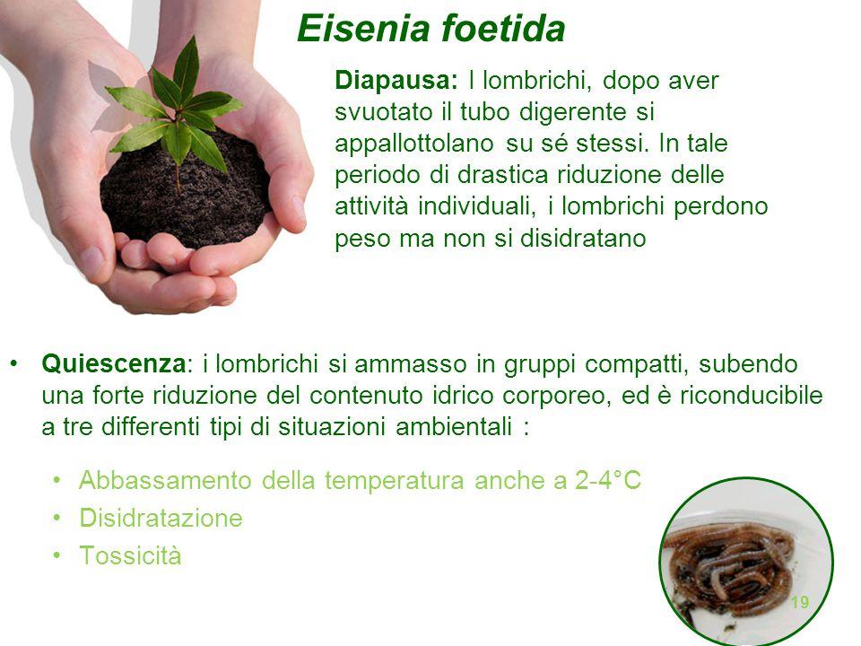 Eisenia foetida Fenologia