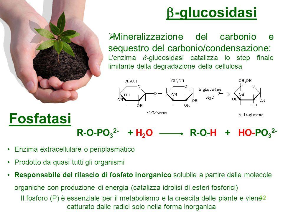 b-glucosidasi Fosfatasi