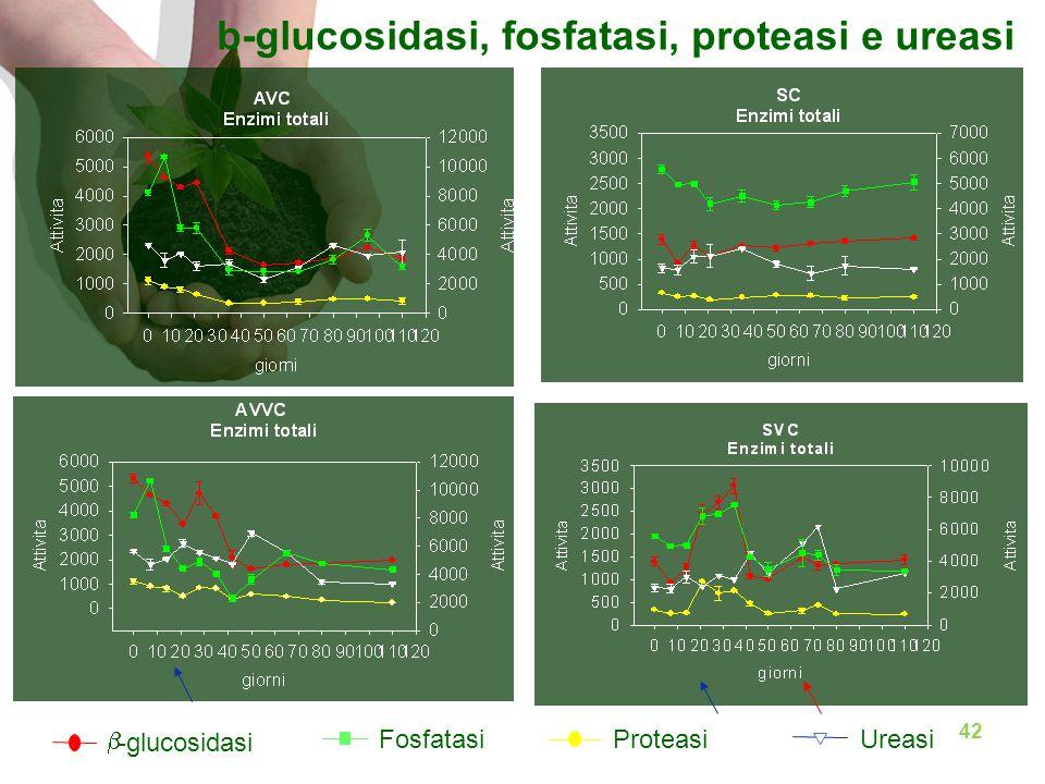 b-glucosidasi, fosfatasi, proteasi e ureasi