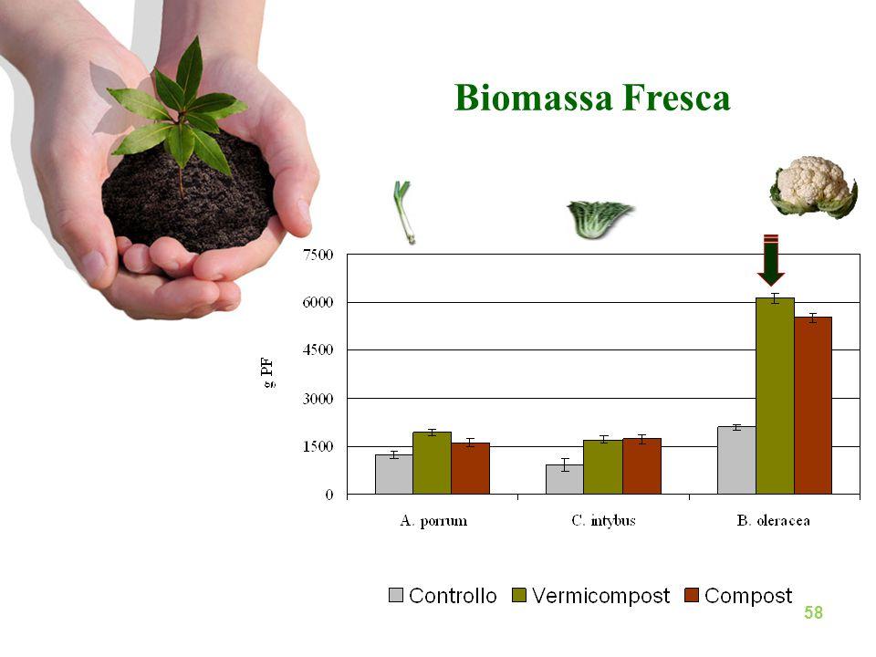 Biomassa Fresca B. oleracea tale innalzamento è stato