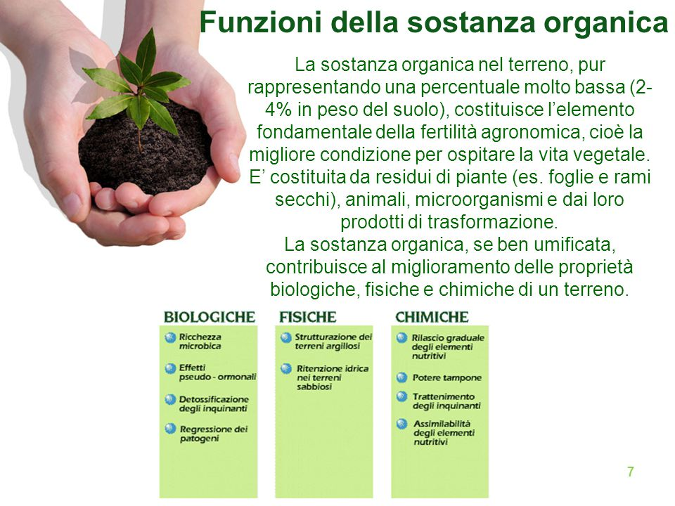 Funzioni della sostanza organica