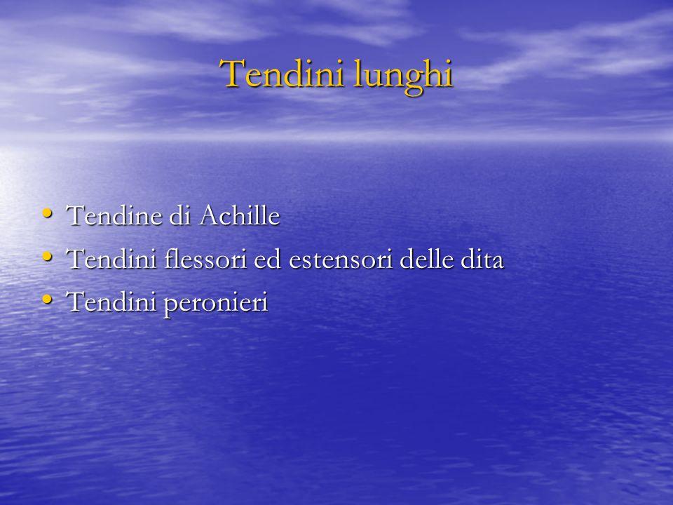 Tendini lunghi Tendine di Achille