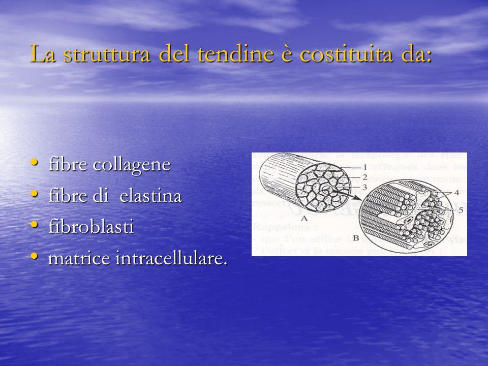 La struttura del tendine è costituita da: