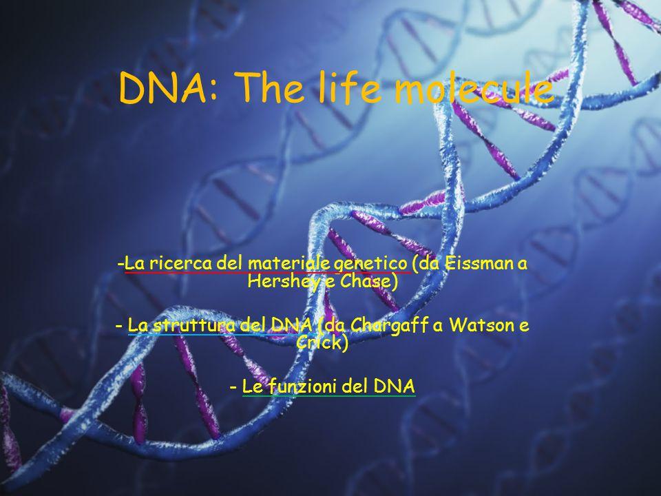 DNA: The life molecule La ricerca del materiale genetico (da Eissman a Hershey e Chase) La struttura del DNA (da Chargaff a Watson e Crick)