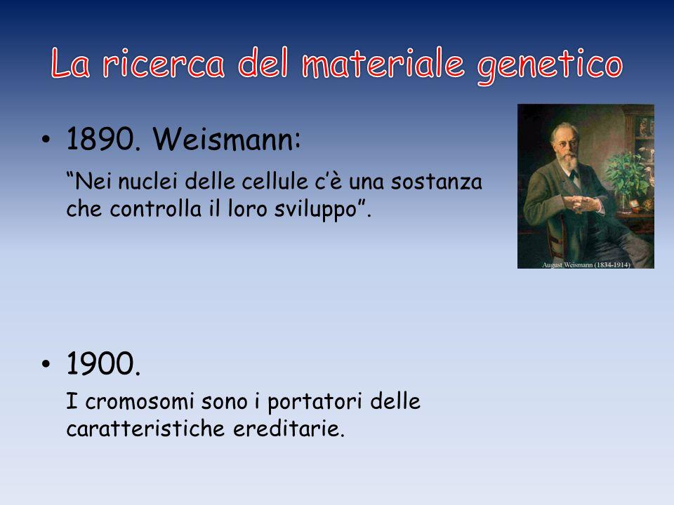 La ricerca del materiale genetico