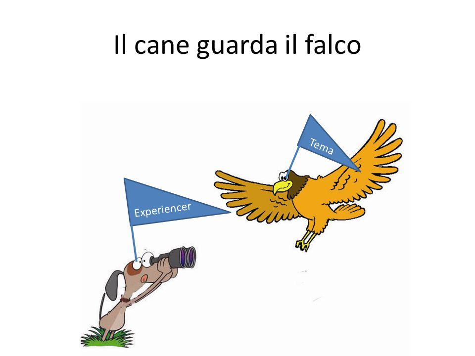 Il cane guarda il falco Tema Experiencer
