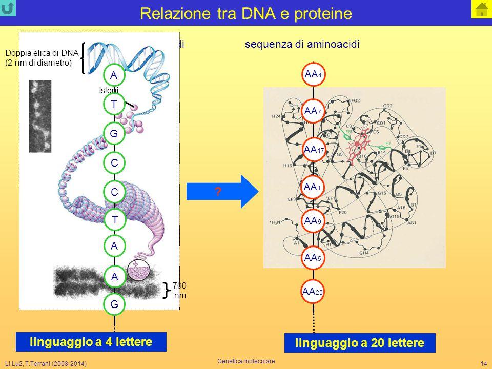 Relazione tra DNA e proteine