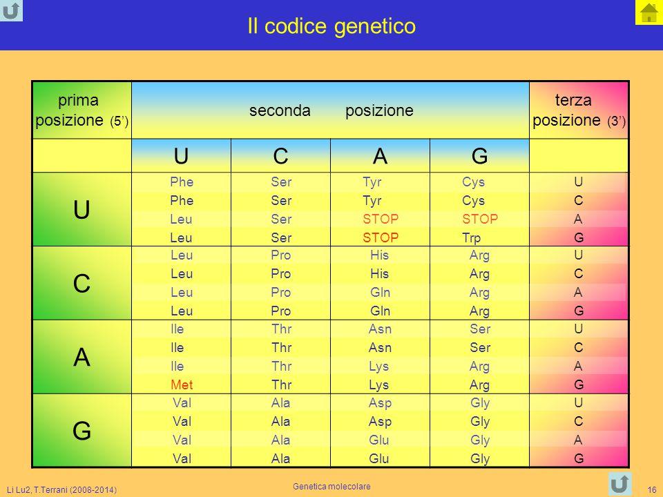 Il codice genetico U C A G prima posizione (5') seconda posizione