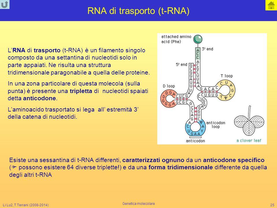RNA di trasporto (t-RNA)