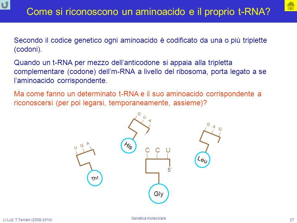 Come si riconoscono un aminoacido e il proprio t-RNA