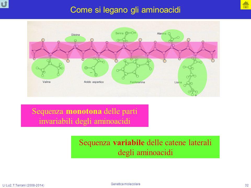 Come si legano gli aminoacidi