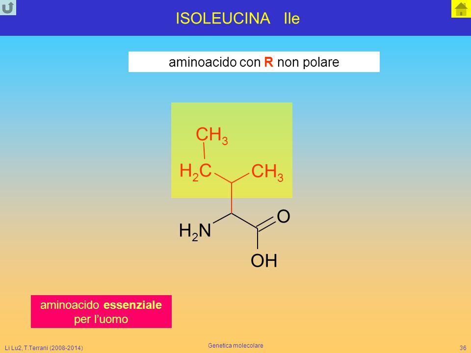 N H C O ISOLEUCINA Ile aminoacido con R non polare 3 2