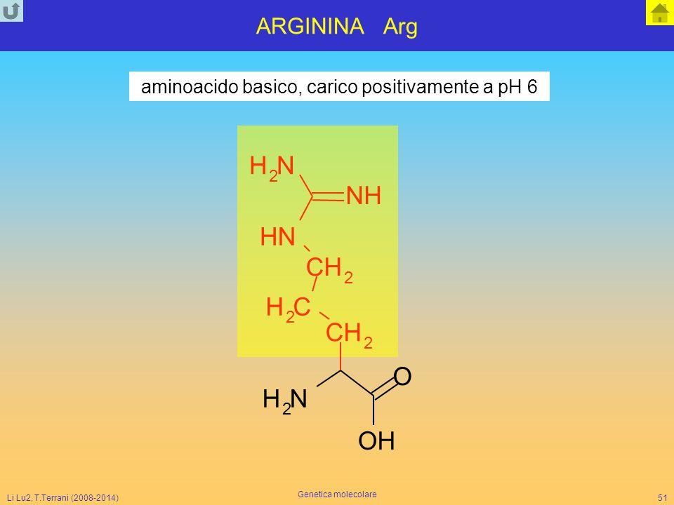 aminoacido basico, carico positivamente a pH 6