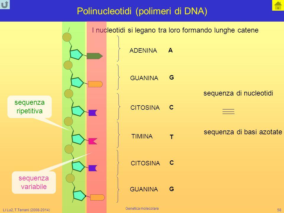 Polinucleotidi (polimeri di DNA)