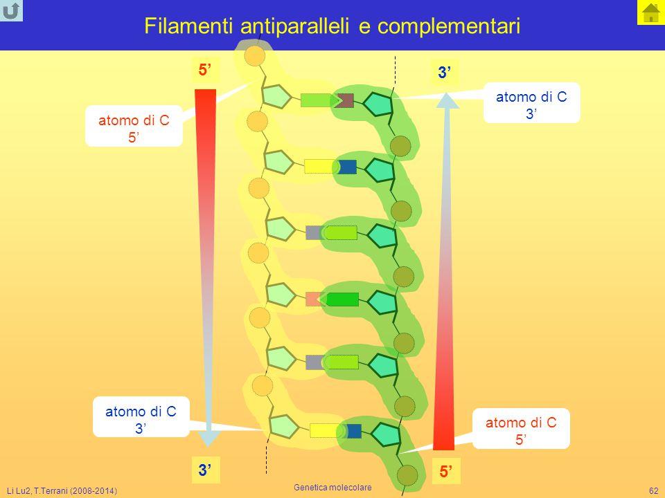 Filamenti antiparalleli e complementari