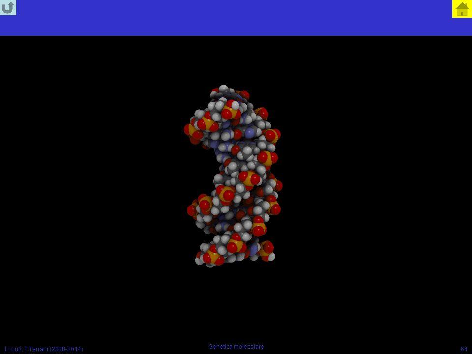 Li Lu2, T.Terrani (2008-2014) Genetica molecolare