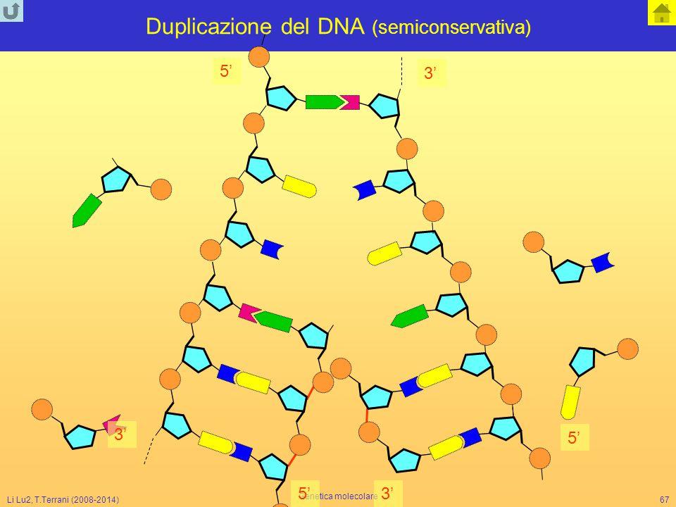 Duplicazione del DNA (semiconservativa)