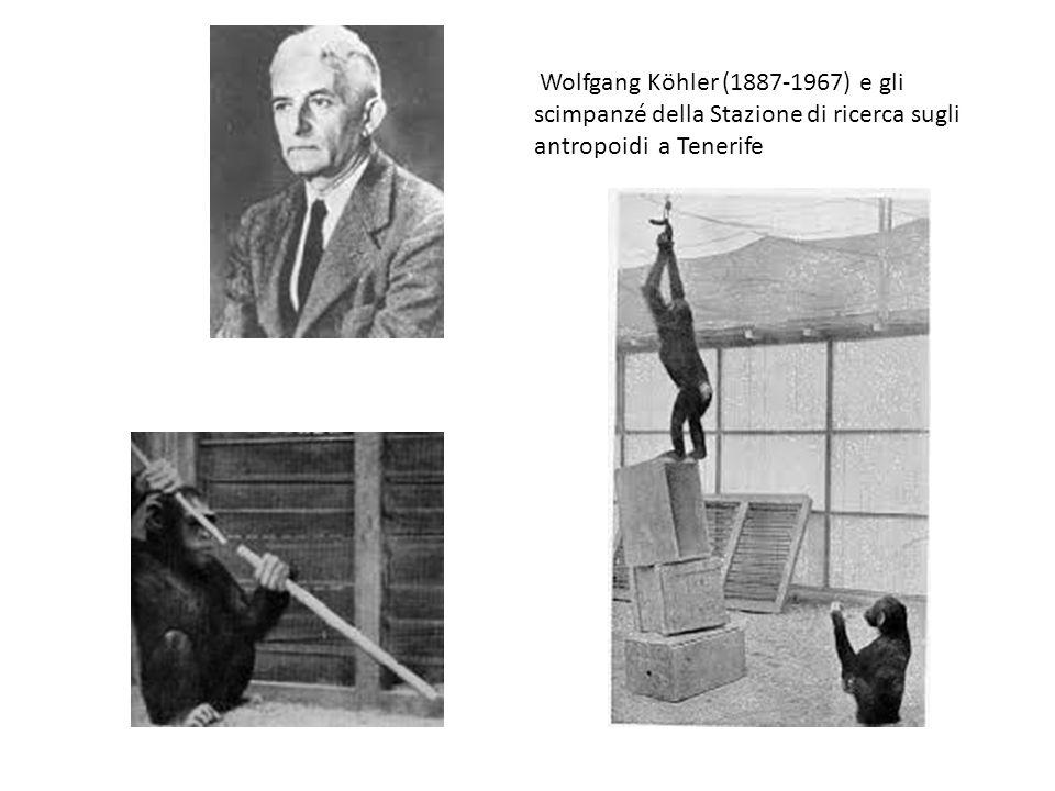 Wolfgang Köhler (1887-1967) e gli scimpanzé della Stazione di ricerca sugli antropoidi a Tenerife