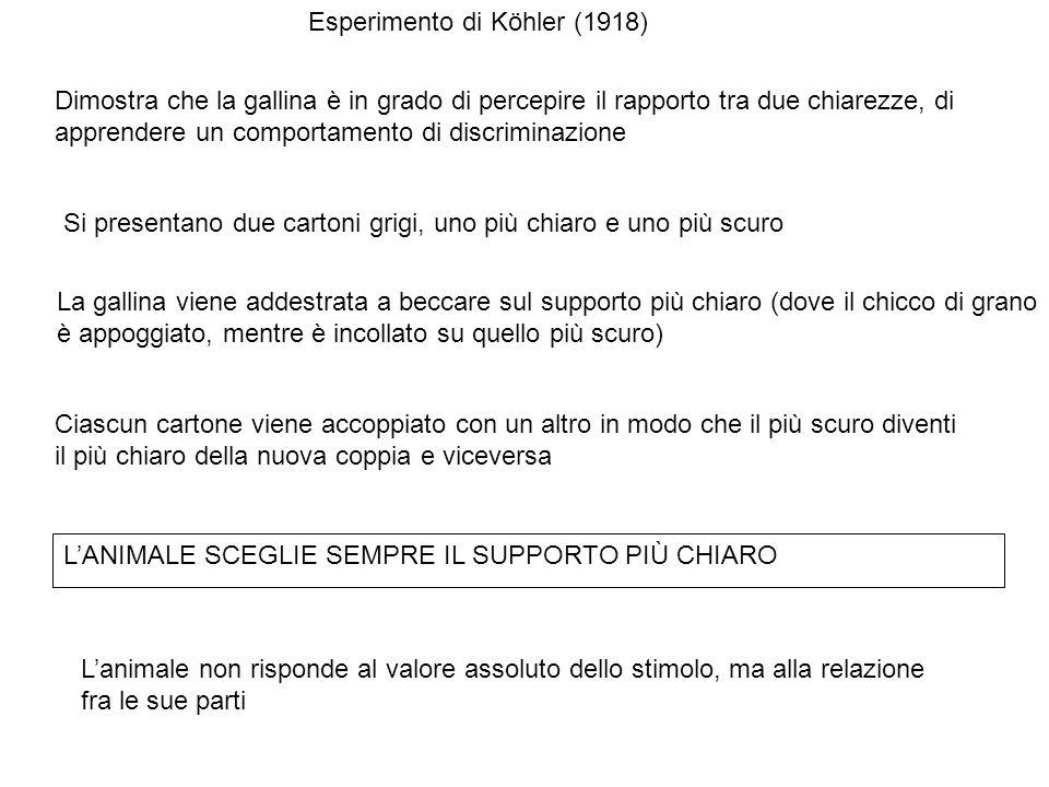 Esperimento di Köhler (1918)