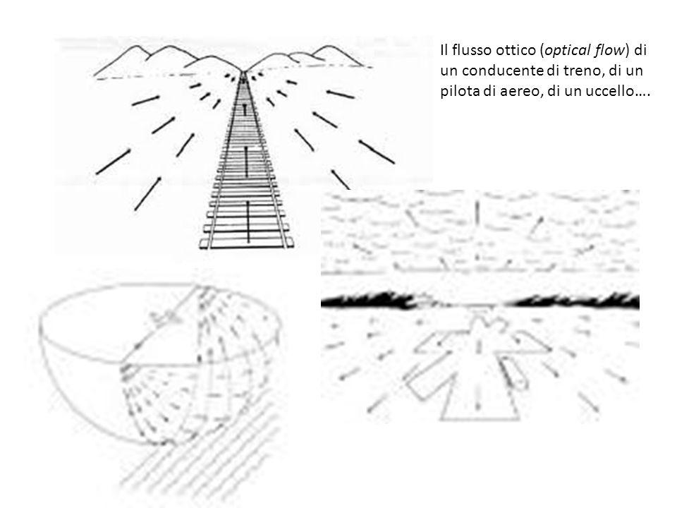 Il flusso ottico (optical flow) di un conducente di treno, di un pilota di aereo, di un uccello….