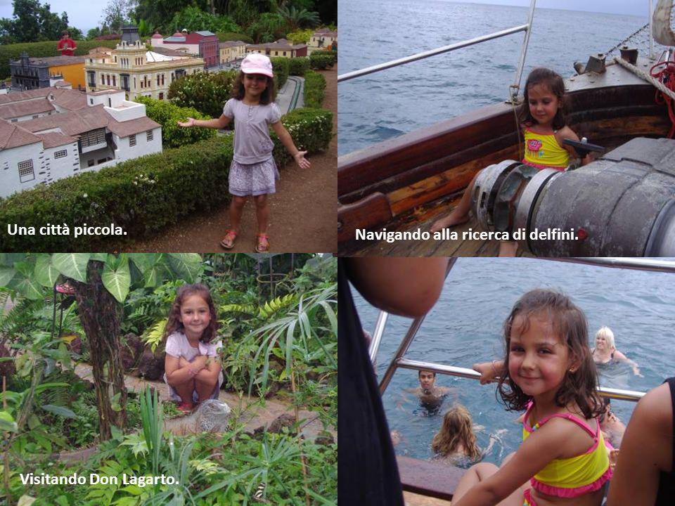 Una città piccola. Navigando alla ricerca di delfini. Visitando Don Lagarto.