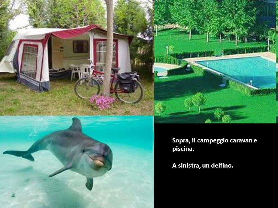 Sopra, il campeggio caravan e piscina. A sinistra, un delfino.