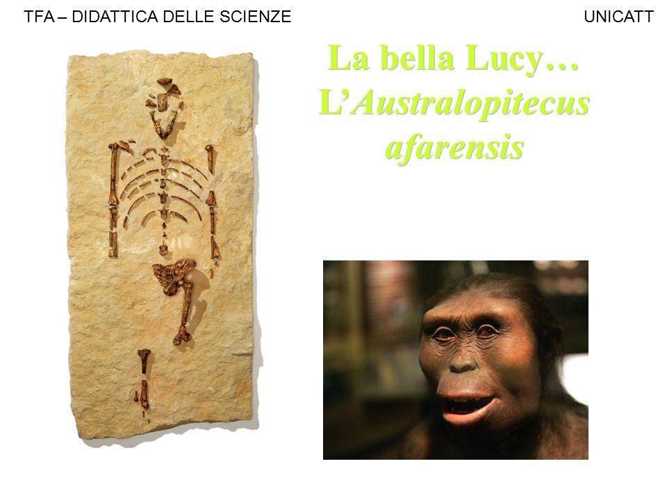 L'Australopitecus afarensis