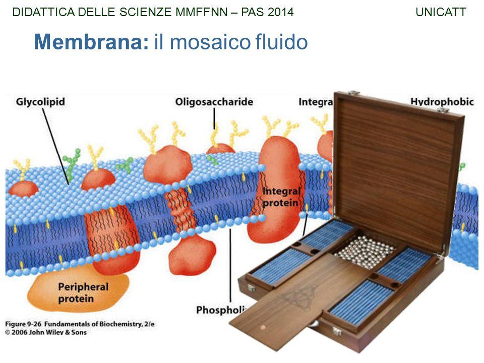 Membrana: il mosaico fluido