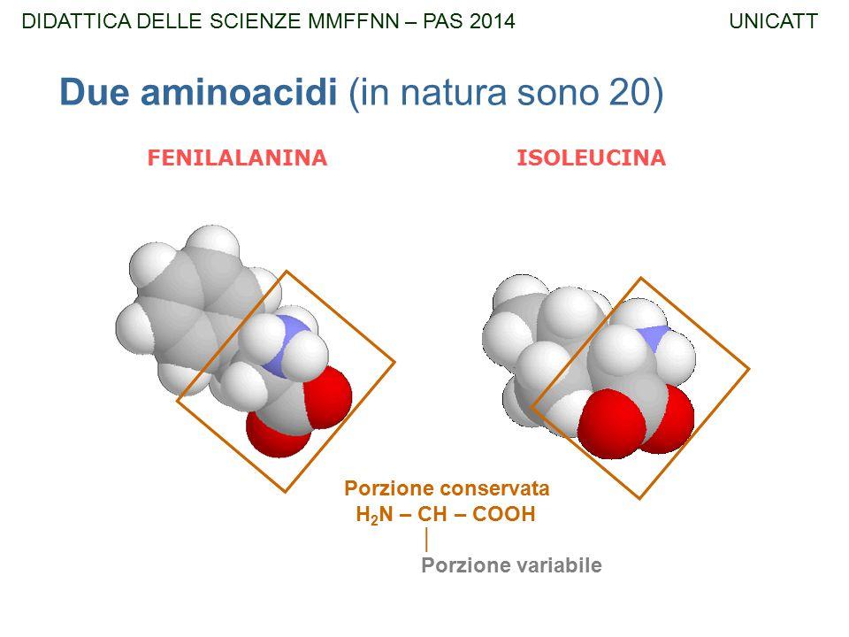 Due aminoacidi (in natura sono 20)