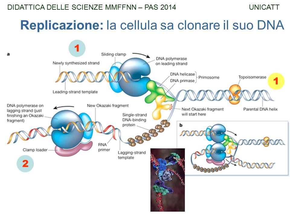 Replicazione: la cellula sa clonare il suo DNA