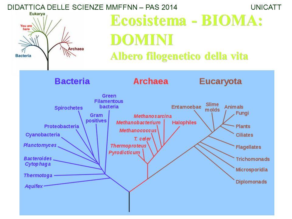 Ecosistema - BIOMA: DOMINI Albero filogenetico della vita