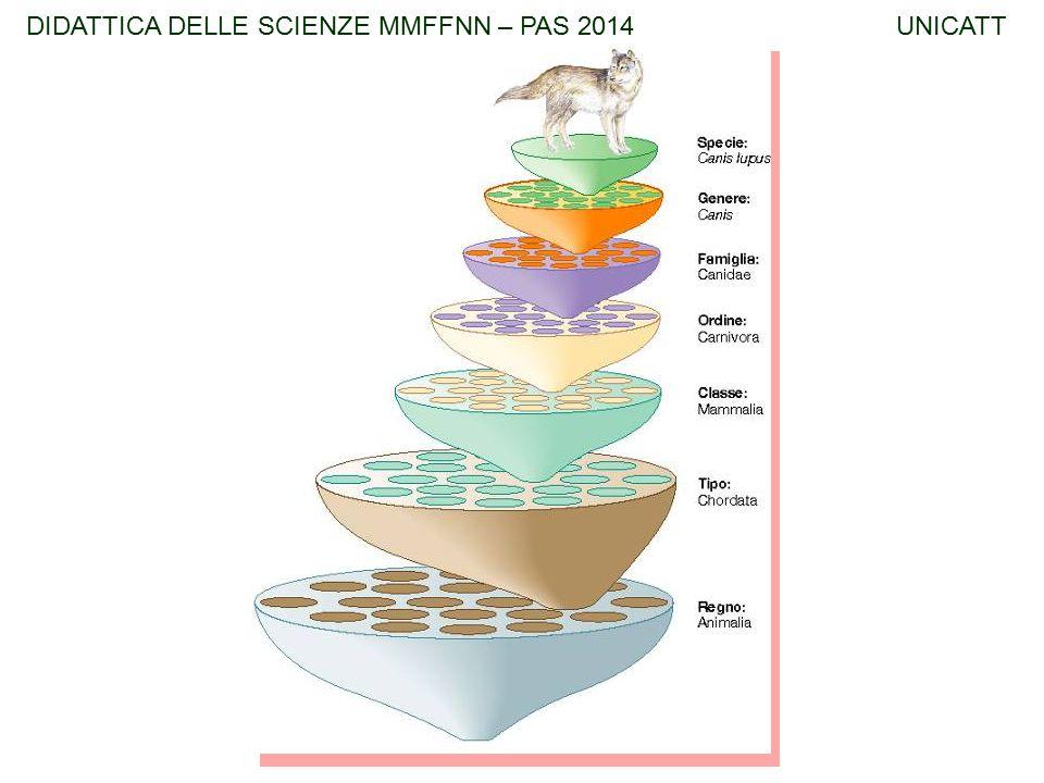 DIDATTICA DELLE SCIENZE MMFFNN – PAS 2014 UNICATT