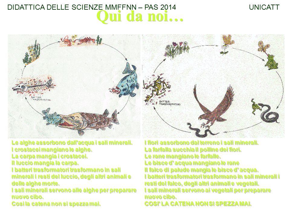 Qui da noi… DIDATTICA DELLE SCIENZE MMFFNN – PAS 2014 UNICATT