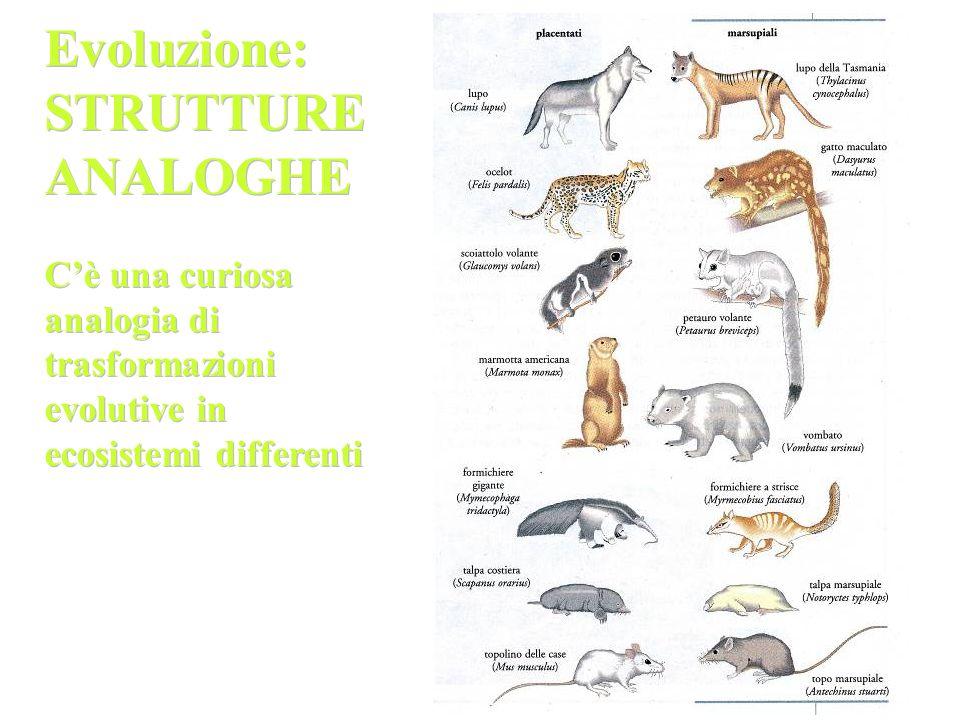 Evoluzione: STRUTTURE ANALOGHE