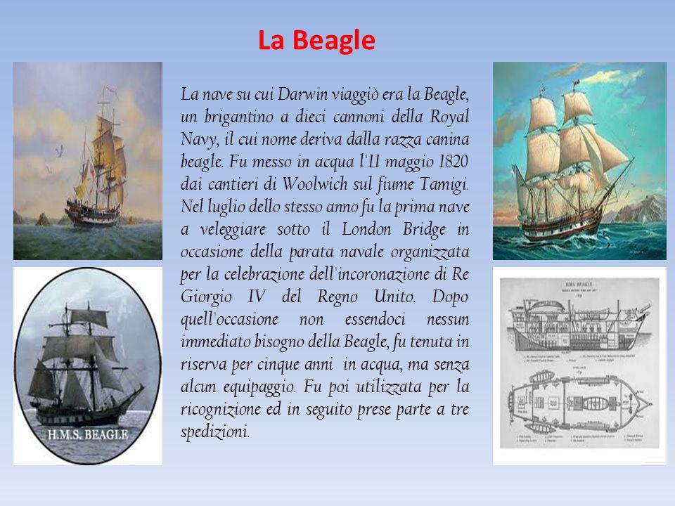 La Beagle