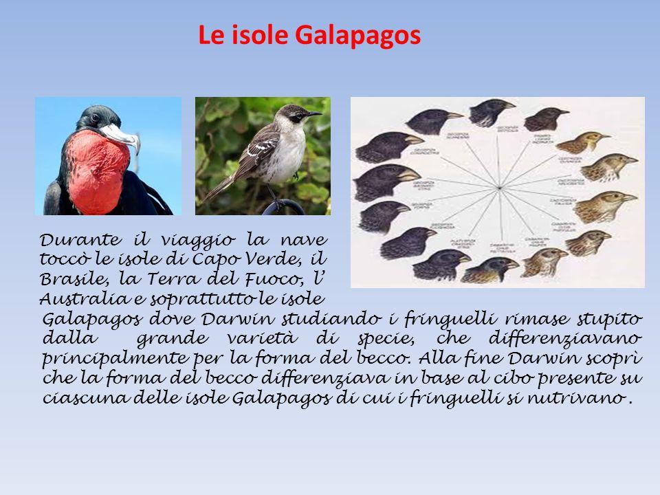 Le isole Galapagos Durante il viaggio la nave toccò le isole di Capo Verde, il Brasile, la Terra del Fuoco, l' Australia e soprattutto le isole.
