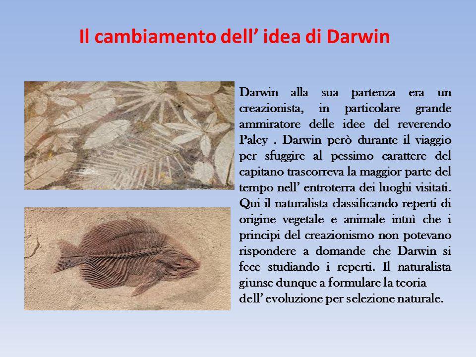Il cambiamento dell' idea di Darwin