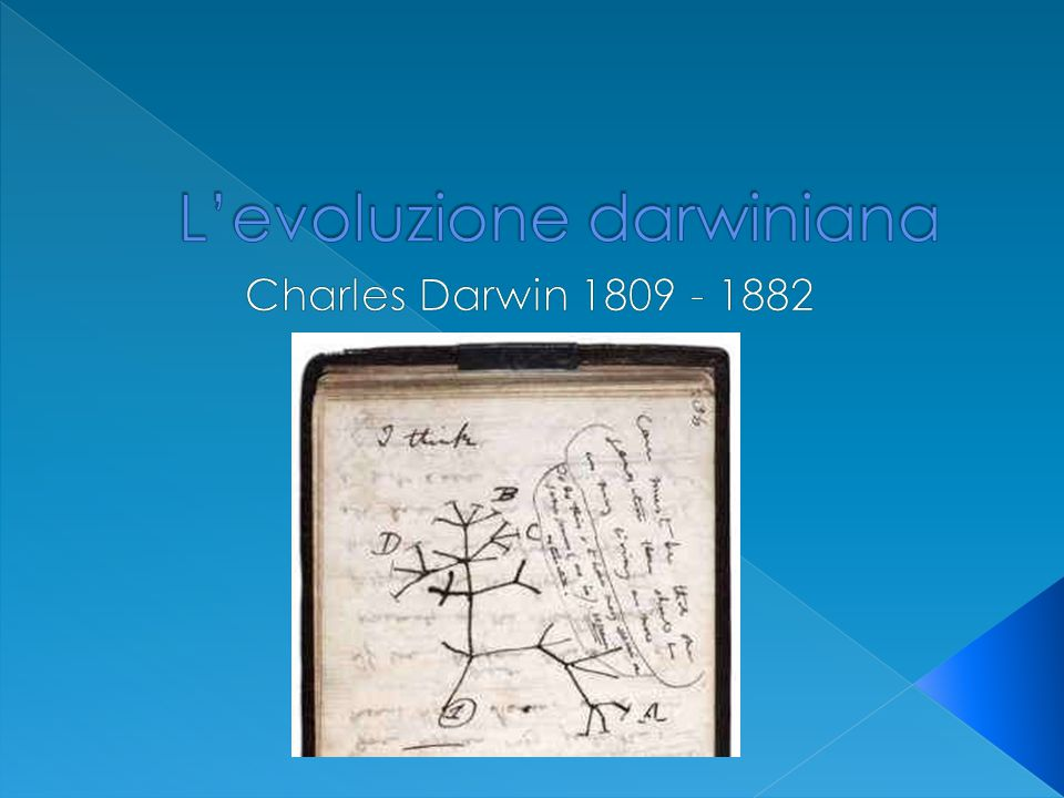 L'evoluzione darwiniana
