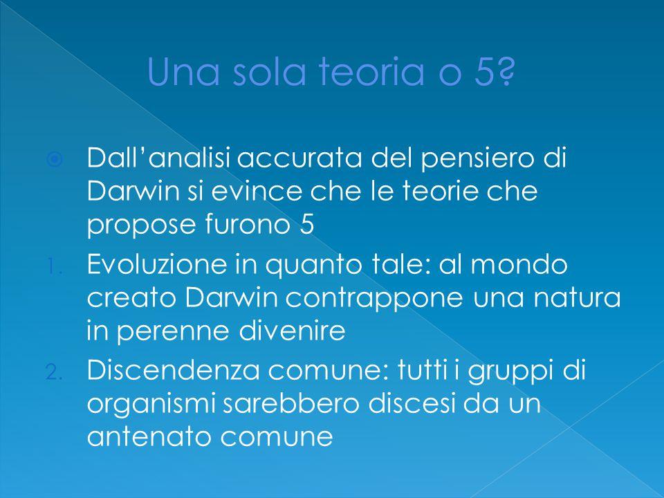 Una sola teoria o 5 Dall'analisi accurata del pensiero di Darwin si evince che le teorie che propose furono 5.