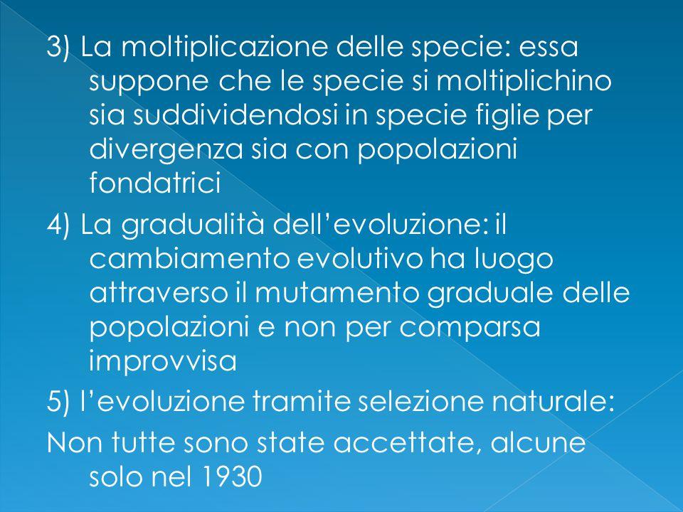 3) La moltiplicazione delle specie: essa suppone che le specie si moltiplichino sia suddividendosi in specie figlie per divergenza sia con popolazioni fondatrici