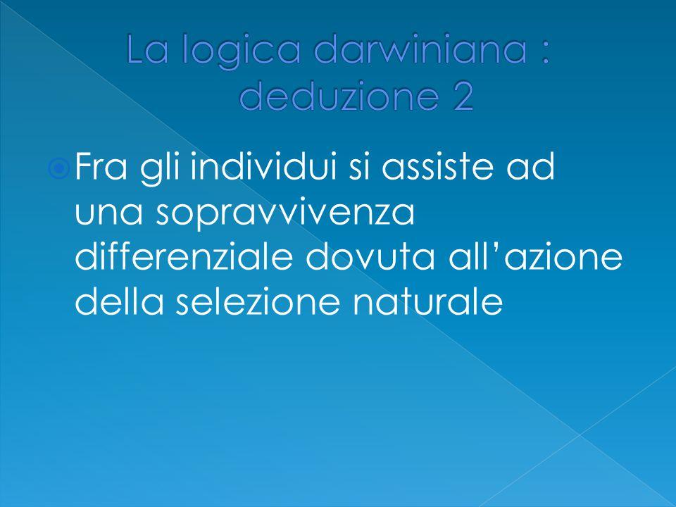La logica darwiniana : deduzione 2