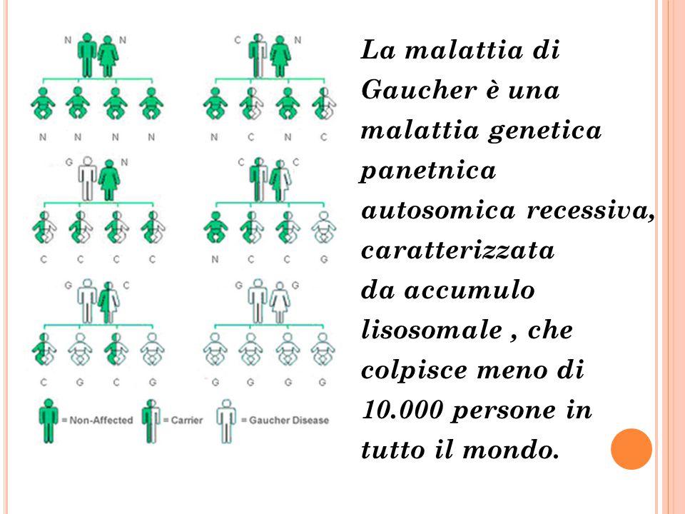 La malattia di Gaucher è una malattia genetica panetnica autosomica recessiva, caratterizzata